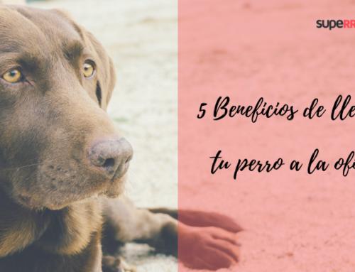 5 Beneficios de llevar a tu perro a la oficina
