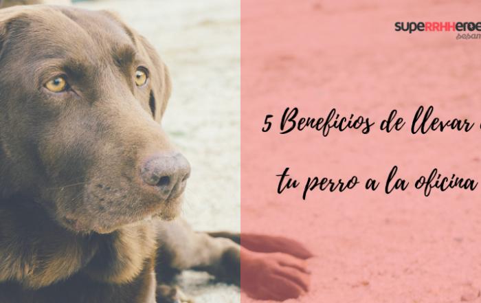 beneficios de trabajar con tu mejor amigo, tu perro